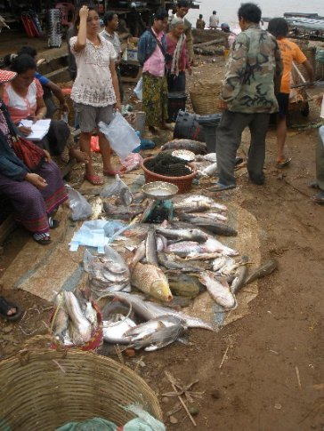 Mekong fish in the market.