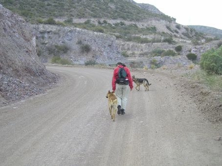 Walking in Canyon Atuel. Lou with doggie companions.