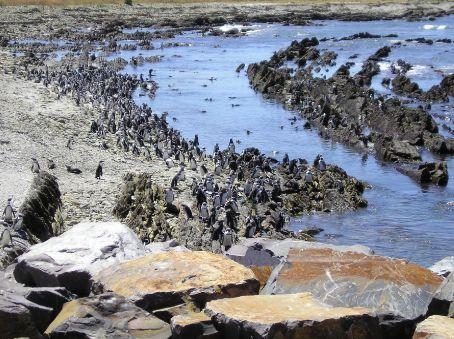 The Robben Island Penguin Colony.