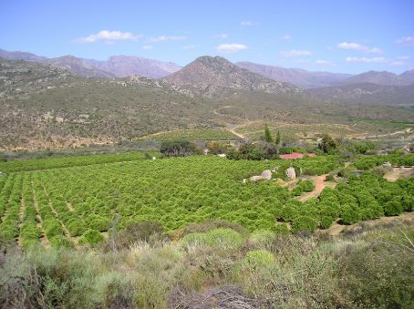 Orange Grove in South Africa.