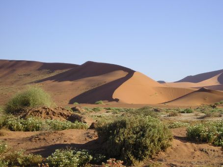Sand dunes in the Namib Naukluft National Park.