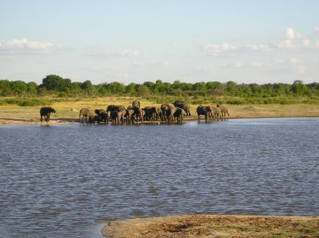 A herd of Elephants at a water hole, Hawange.