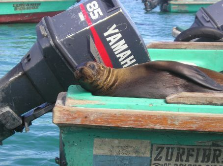 A Sea Lion chilling out.