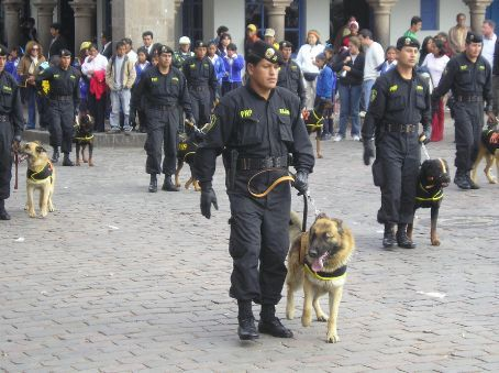 Cusco's dog force on parade.