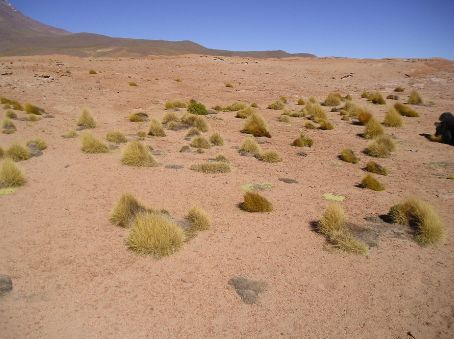 The semi desert landscape.