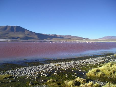 The red lake, which is coloured red by alge. The line of pink in the mid distance are Flamingos.