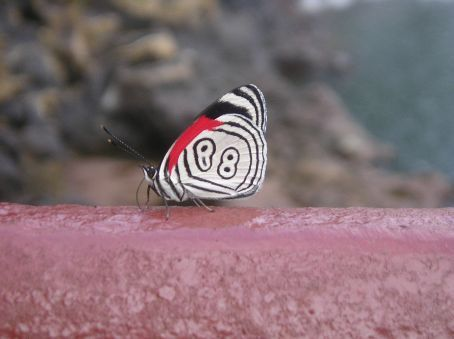 One of the butterflies that live in the National Park around the falls.