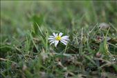 daisy in the valley : by wyatt_76, Views[49]