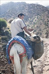 Life is hard for Berber people living in the highest village on the way to the topmost peak in Morocco. They have to rely solely on four-legged transportation to carry bare necessities to their homes. It is an everyday struggle but with a mule's stubbornness and a ram's determination one can get anywhere.: by yav, Views[939]