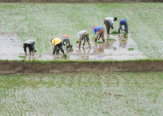 And to survive, people worked the land. (On the way to Subic, Zambales, Philippines)