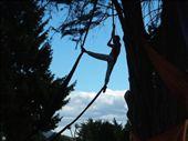 acrobats playing at dusk, main park in el bolson: by yu-en-me, Views[674]