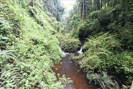 Waterfall trail through the rainforest.