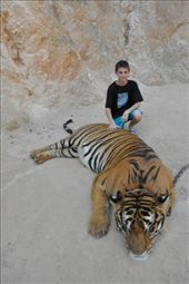 My son could fit in that tiger.: by zieak, Views[86]