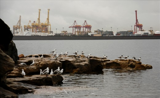 The Kurnell Oil Refinery provides a backdrop against La Perouse, a popular family beach which also harbours local native bird species such as gulls, herons and pelicans of whose typical diet derives from the sea. Not only does the refinery release a range of pollutants into the air including Sulphur Dioxide, but it also releases waste to ocean drains in the surrounding waters. In heavy rain, oily substances can be seen flowing into Botany Bay, creating a temporary 'slick' on the surface.