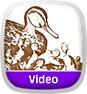 Sammys Story Shop: Make Way for Ducklings and Other Stories Icon
