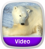 Wild Animal Baby Explorers: Snow Adventures Icon