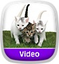 Animal Atlas: Kitten Party Icon