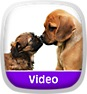 Animal Atlas: Puppy Party Icon