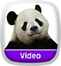 Wild Animal Baby Explorers: Berry Special Bears Icon