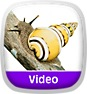 Wild Animal Baby Explorers: Funny Friends - The Slow, the Silly and the Scratchy Icon