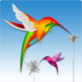 Colibri - innovative digital art form
