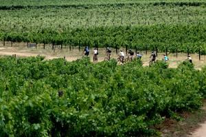 Adventure Tour Wine Tour photo