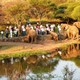 z (discontinued) Sundowners with the Elephants 4x4 Adventure photo
