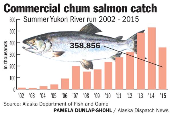 Commercial chum _Yukon