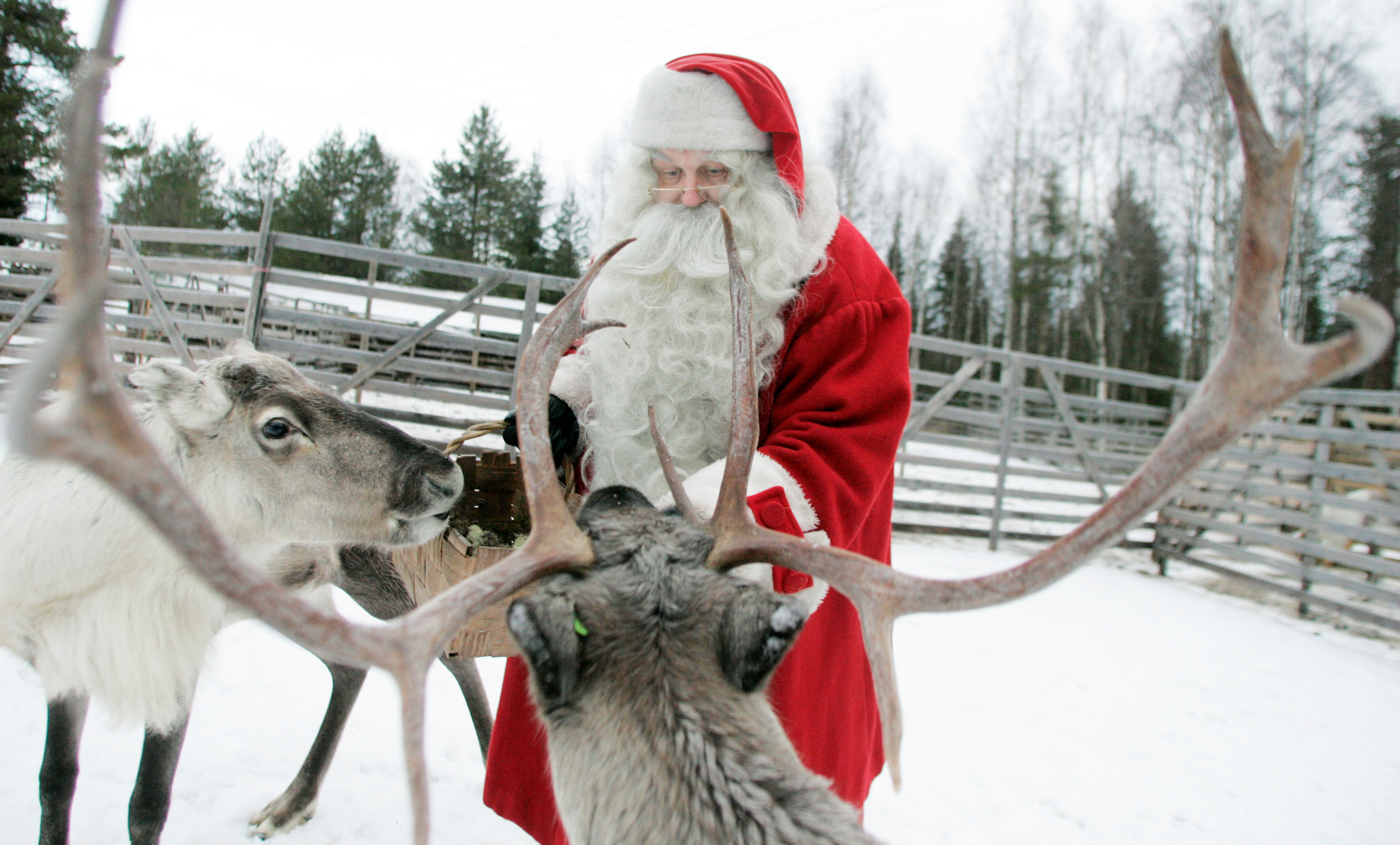 A man dressed as Santa Claus feeds reindeer at a reindeer farm in preparation for Christmas on the Arctic Circle in Rovaniemi, northern Finland on Dec. 19, 2007. (Kacper Pempel / Reuters)