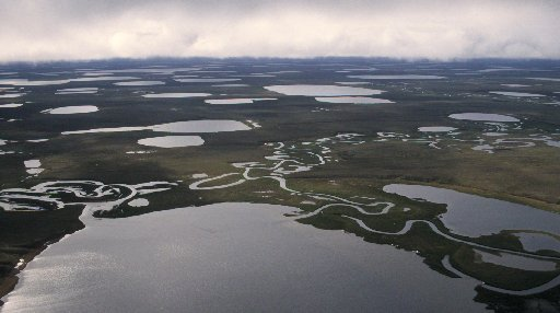 Lakes dominate the landscape in a northern part of the National Petroleum Reserve-Alaska. Fifty percent of the area on the coastal plain between ...... is covered by water. (ANNE RAUP / ADN archive 1997)