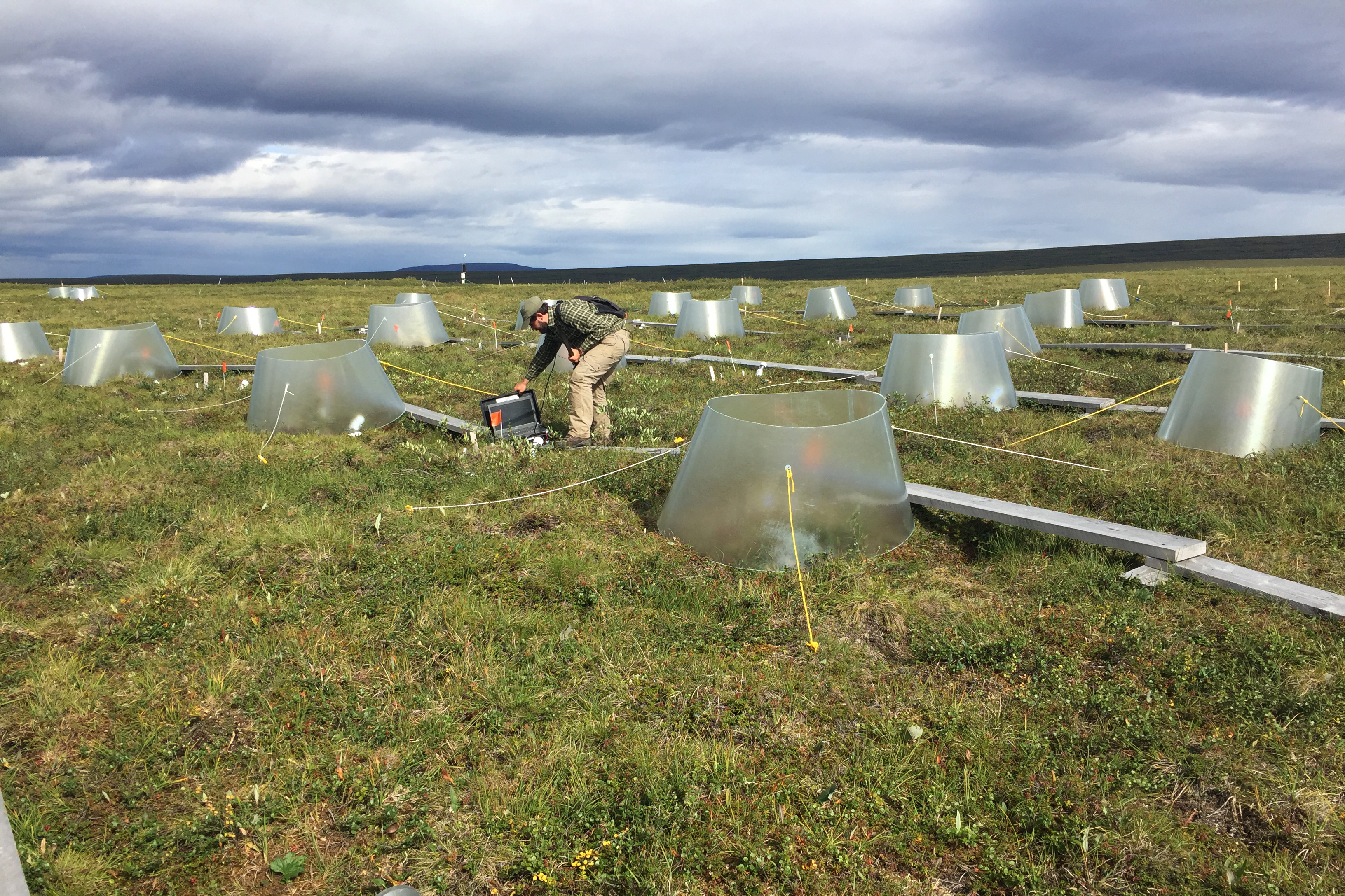 Jon Gewirtzman uses a special tool to look at deep plant roots in an experimental field at Toolik Field Station on August 1, 2017. (Kelsey Lindsey)