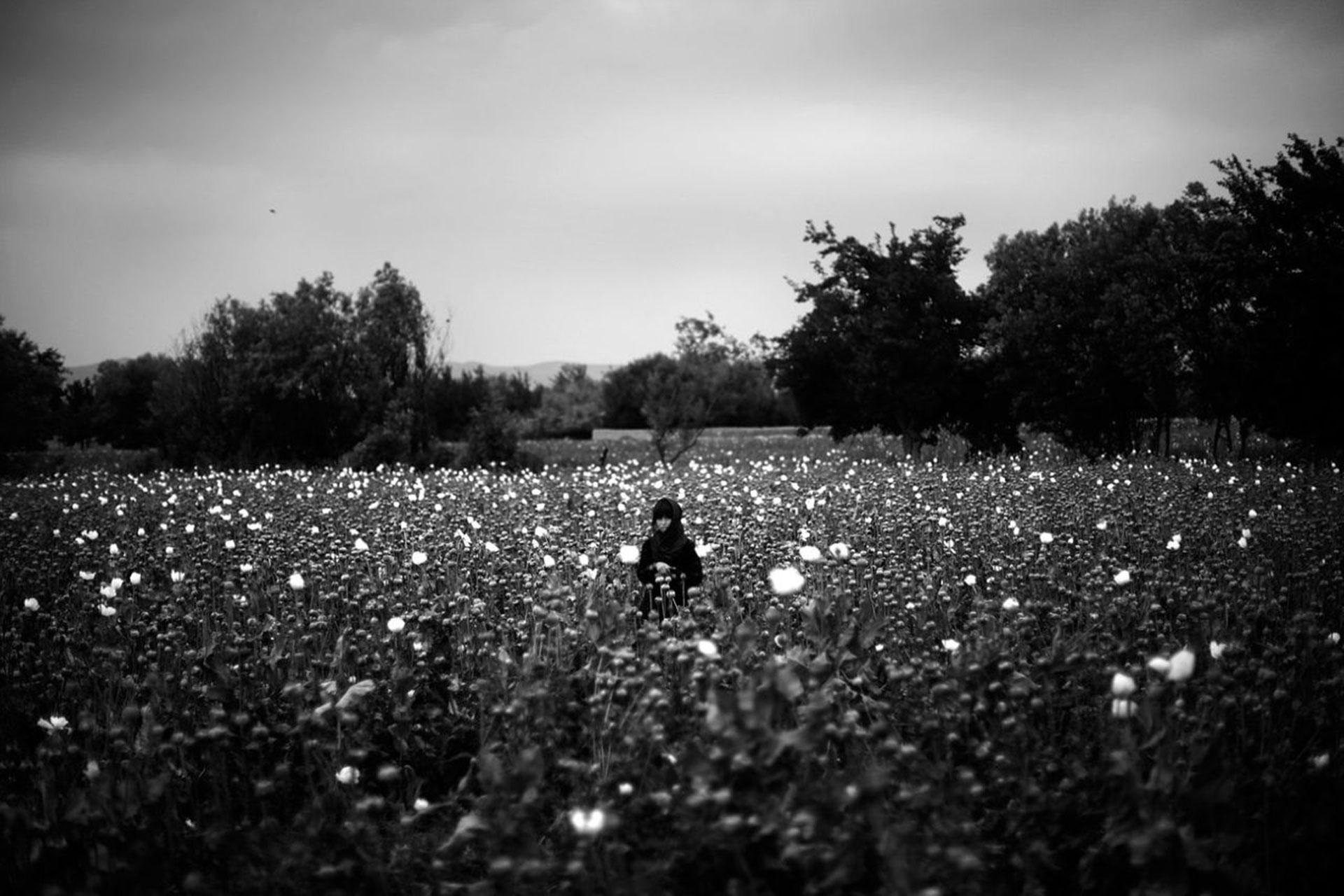 Una niña en medio de un campo de amapolas en medio de Afganistán (2011)