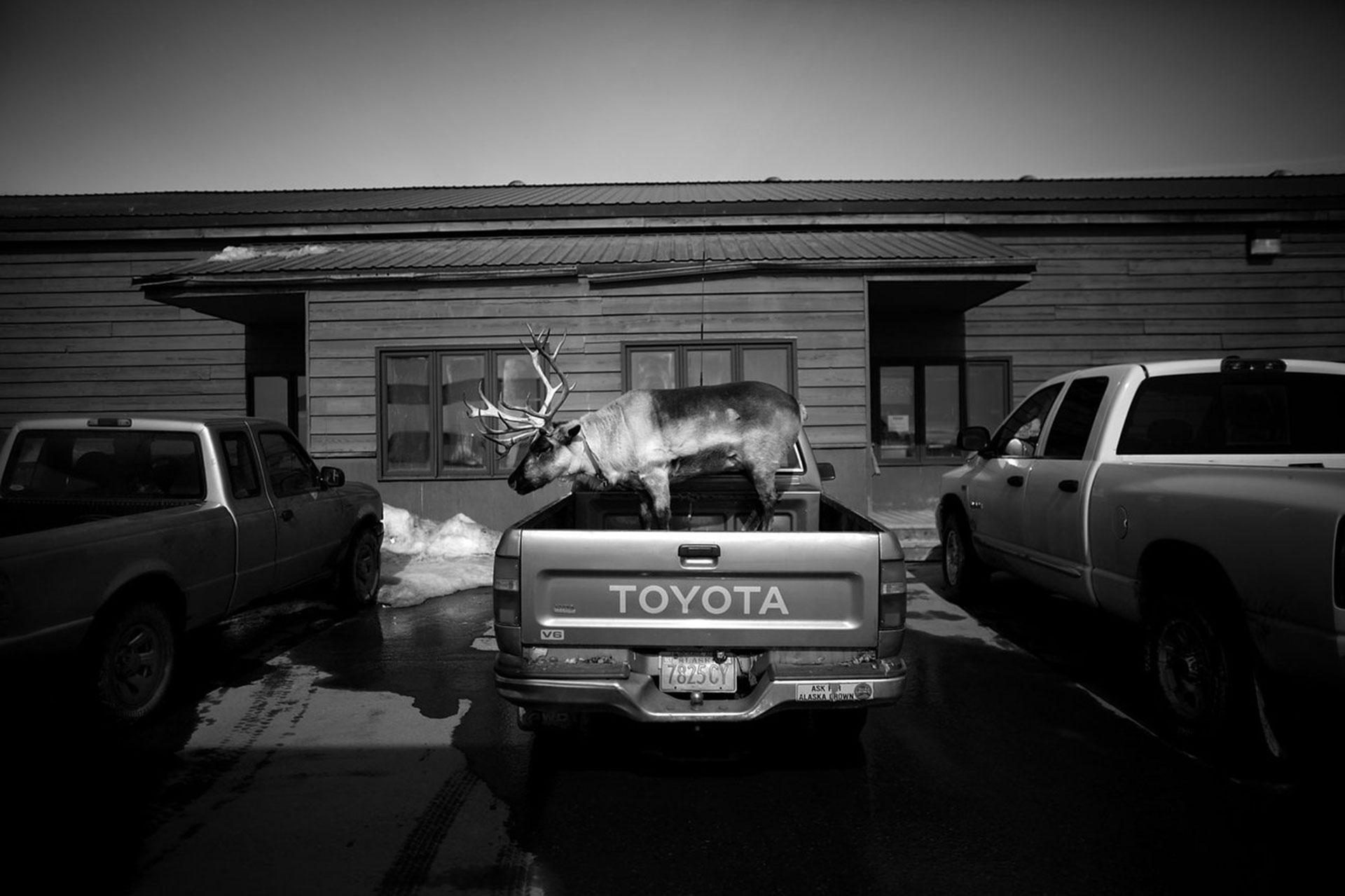 En 2013, David Gilkey visitó Alaska y capturó momentos únicos de la vida silvestre en ese recóndito estado norteameicano