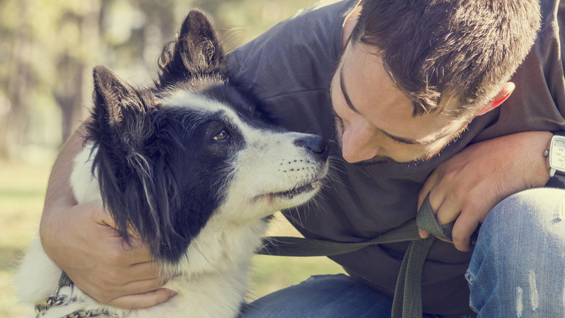 Los especialistas afirmaron que esta comprensión lingüística puede estar relacionada con el desarrollo de la domesticación canina y su propio proceso de adaptación al entorno del ser humano (iStock)