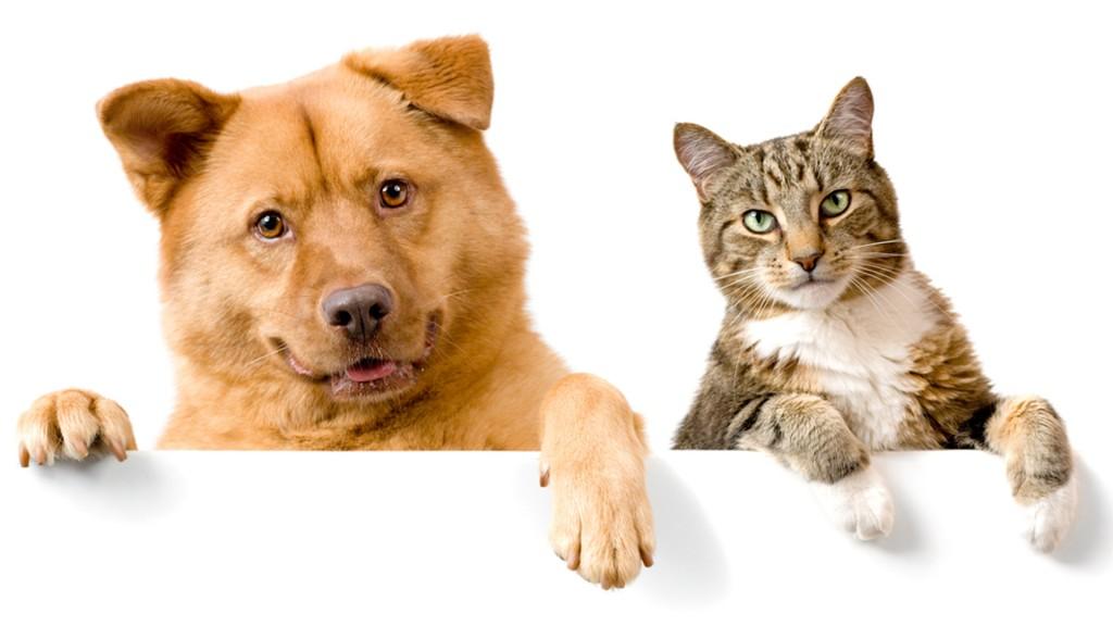 Los perros y los gatos comparten muchos aspectos en su salud. (Shutterstock)