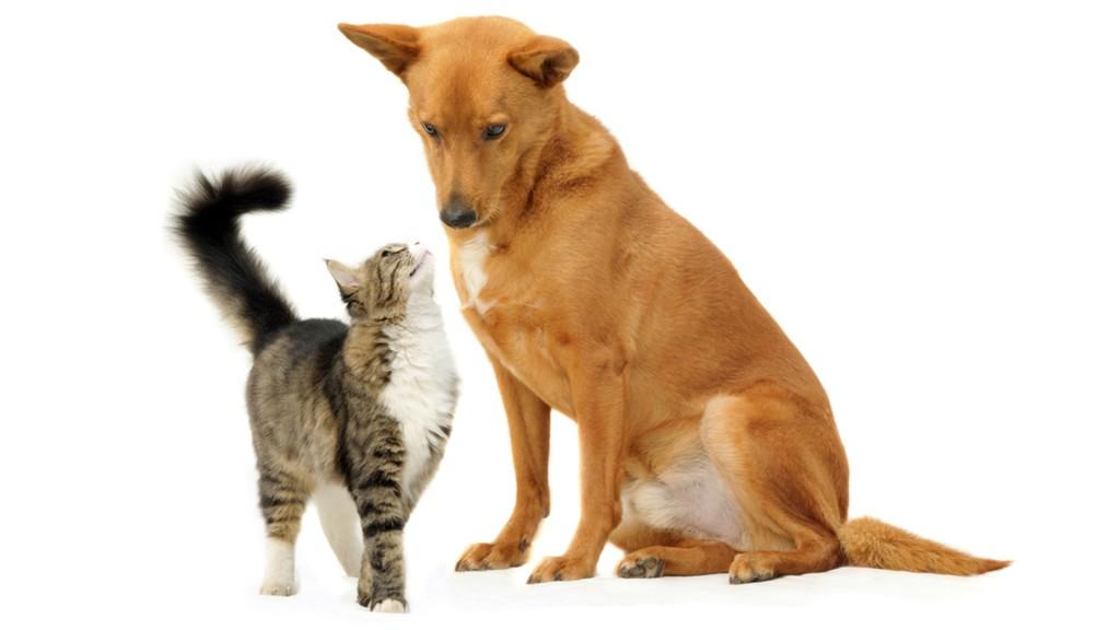 La carga afectiva de los dueños a sus mascotas es fundamental. (Shutterstock)