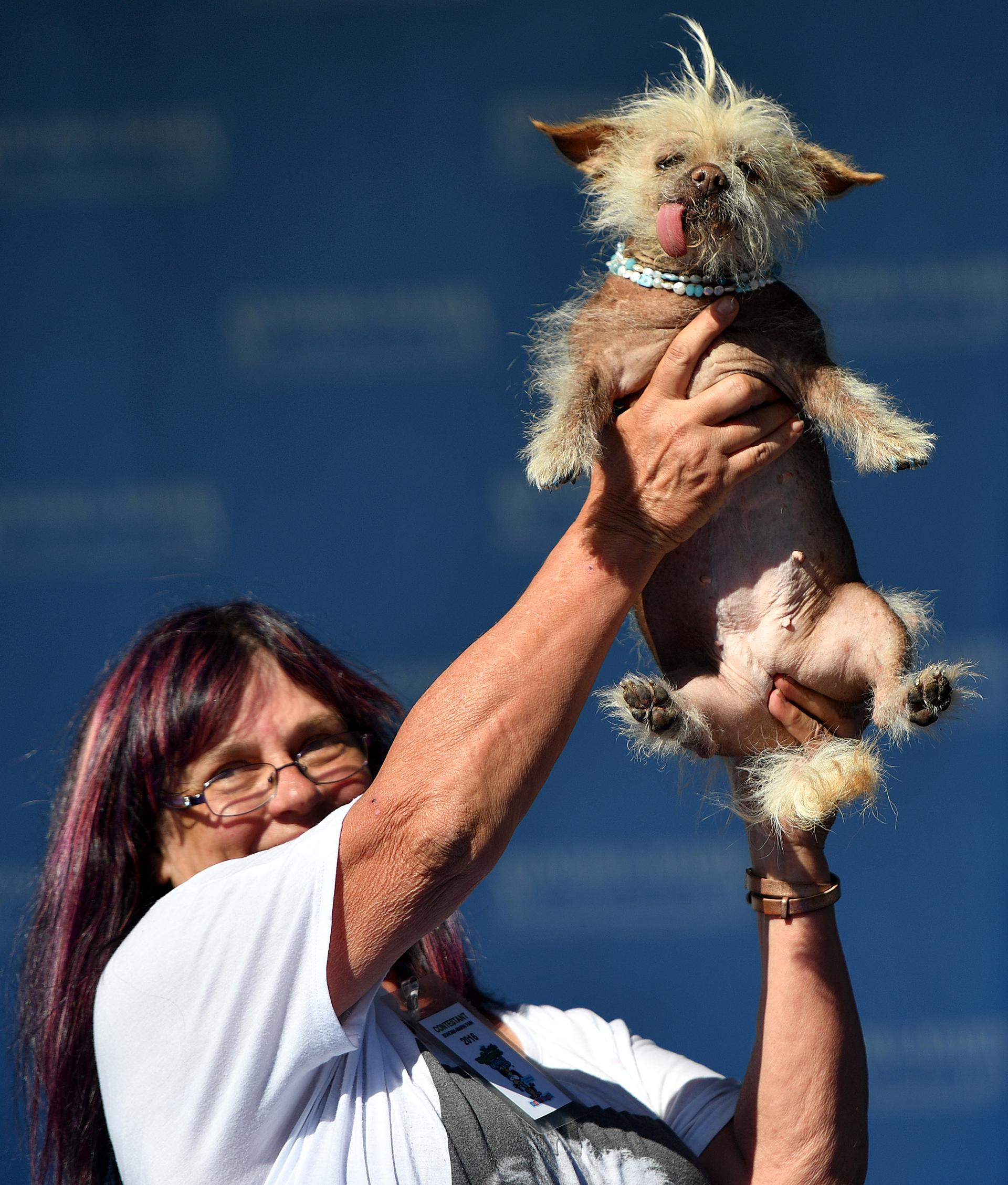 El Baño Mas Feo Del Mundo:El concurso que elige a los perros más feos del mundo