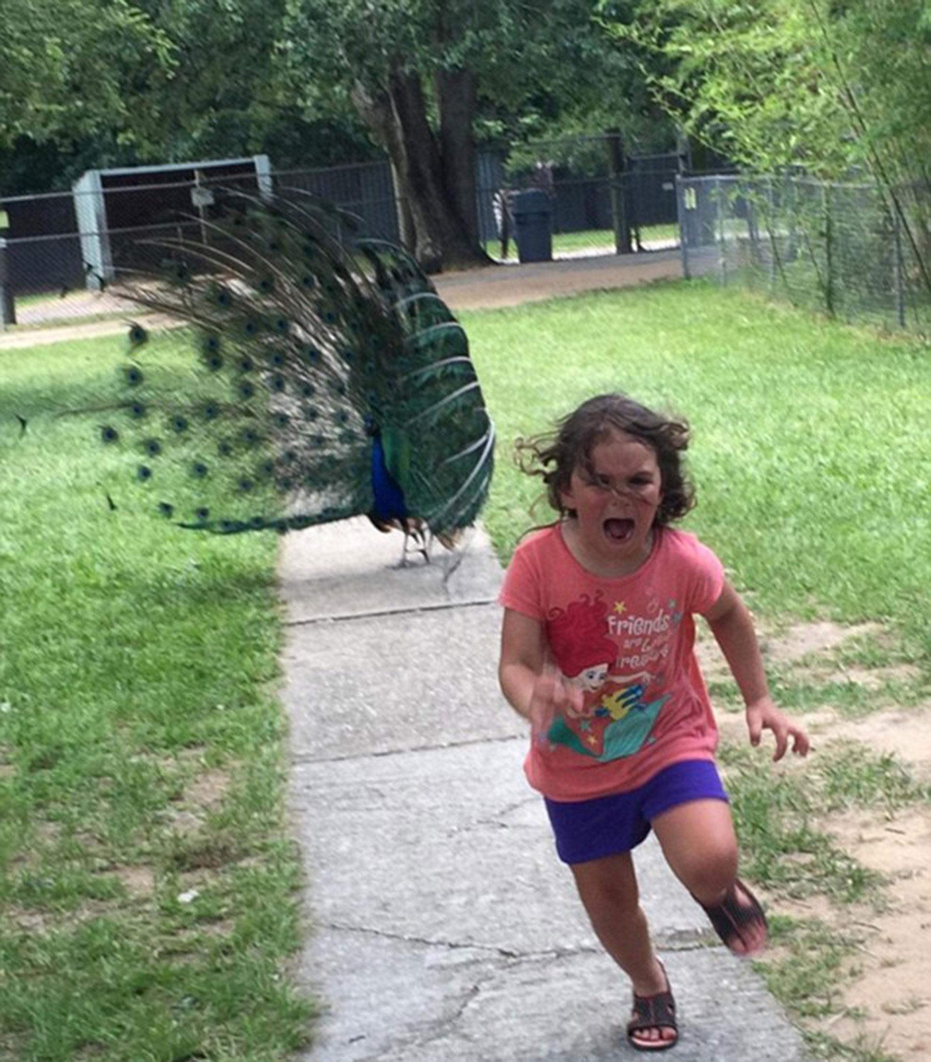 La pequeña corre asustada ante la presencia de un pavo real. La imagen se viralizó y se convirtió en meme