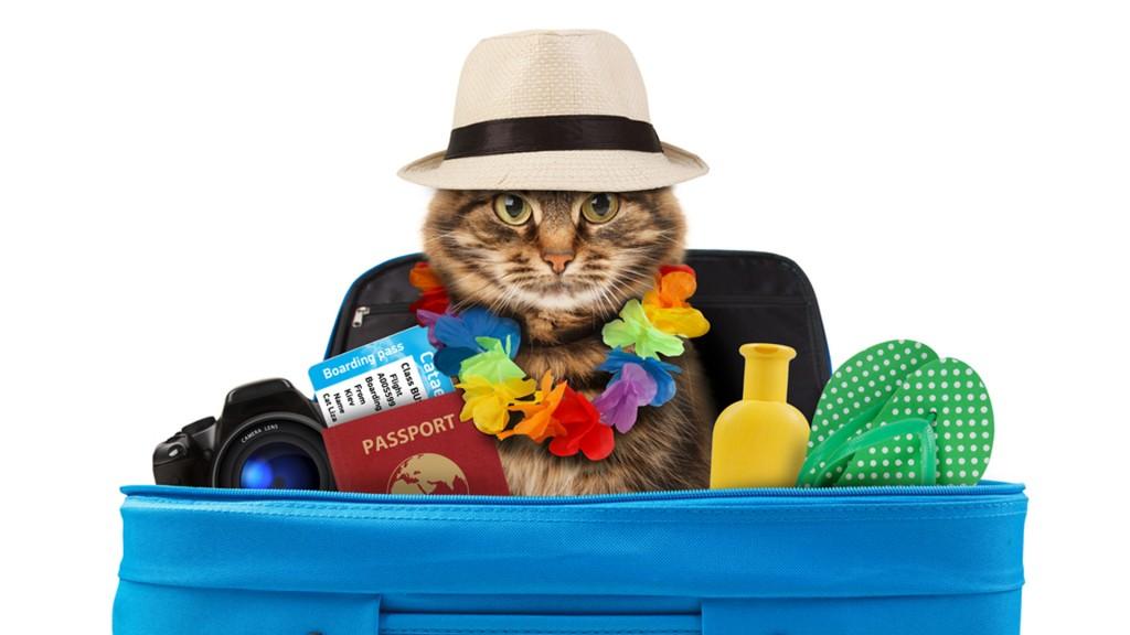 Las mascotas, siempre listas para encontrar un hogar (Shutterstock)