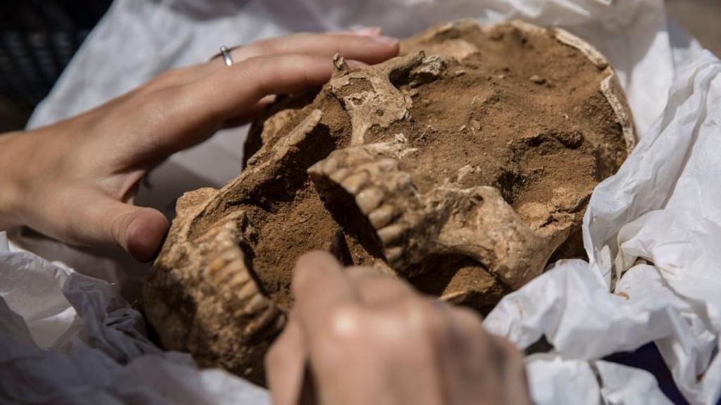 Futuras investigaciones de los esqueletos también incluirán análisis isotópicos de los dientes (Leon Levy Expedition)