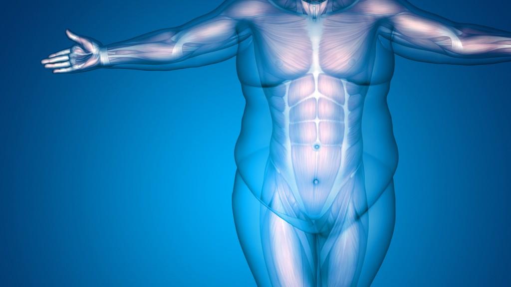 En cuanto a los obesos representan otro 13% de la población mundial adulta, es decir 600 millones de personas (Shutterstock)
