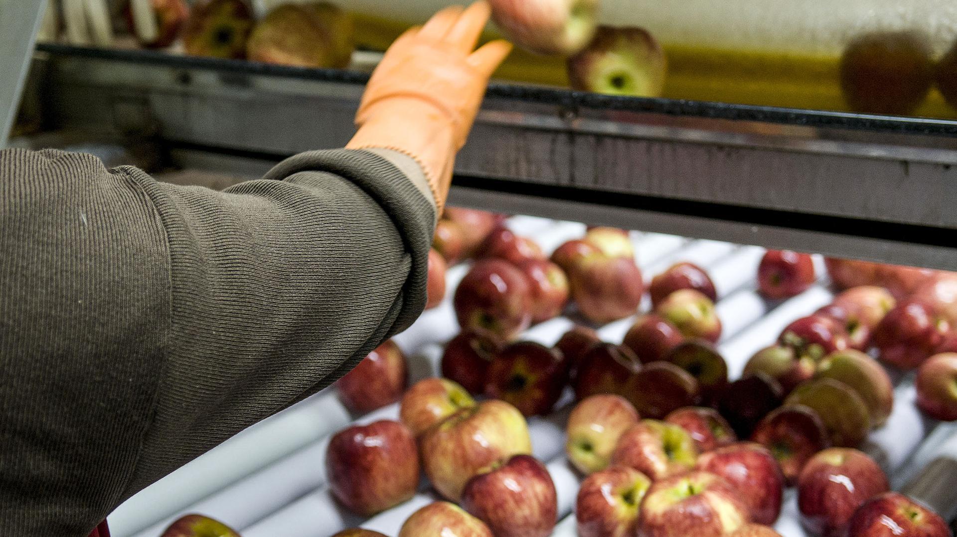 La producción de manzanas y peras se concentra en el Alto Valle de Río Negro. (NA)