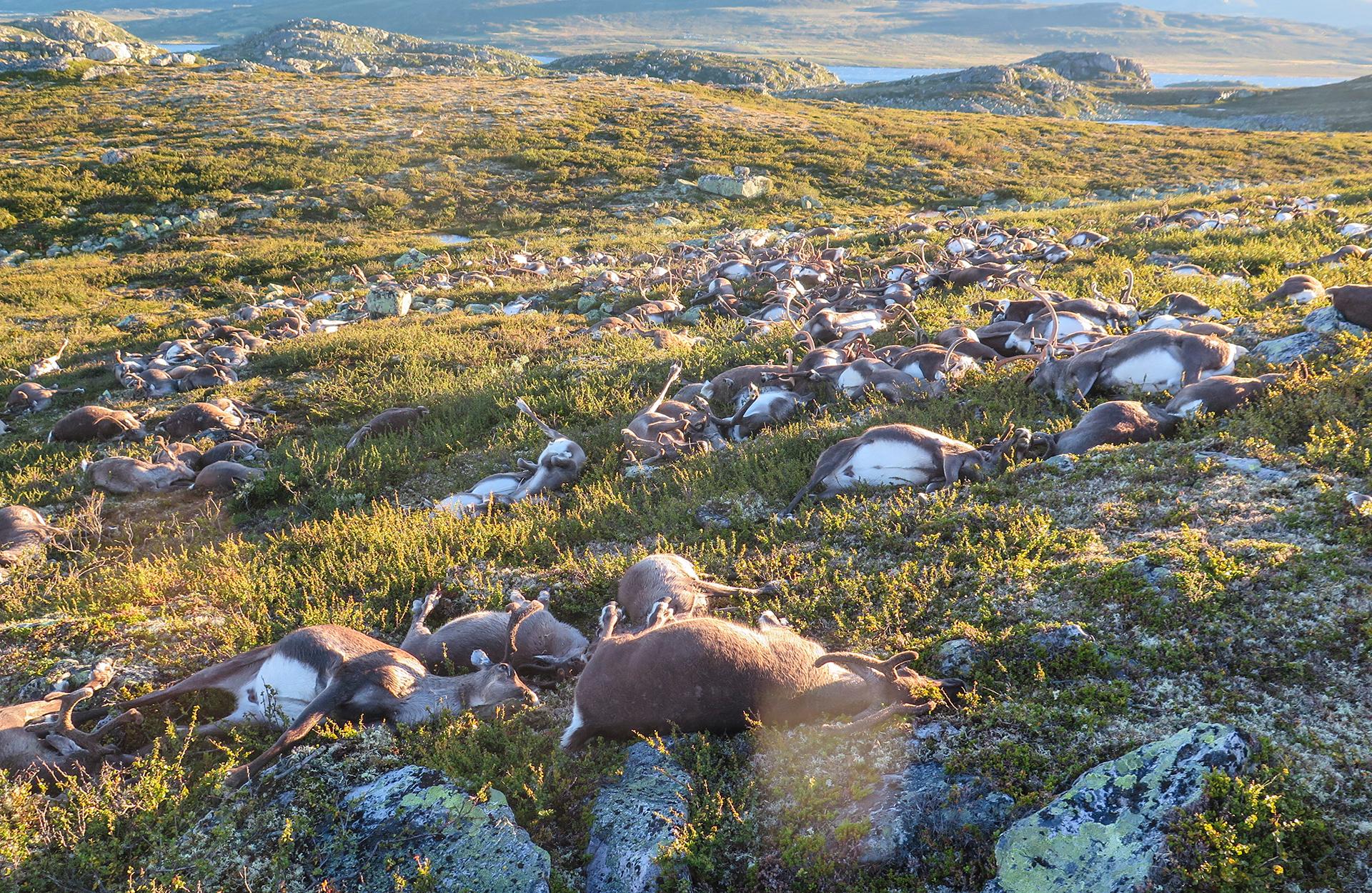 Noruega-ciervos-sf-1.jpg