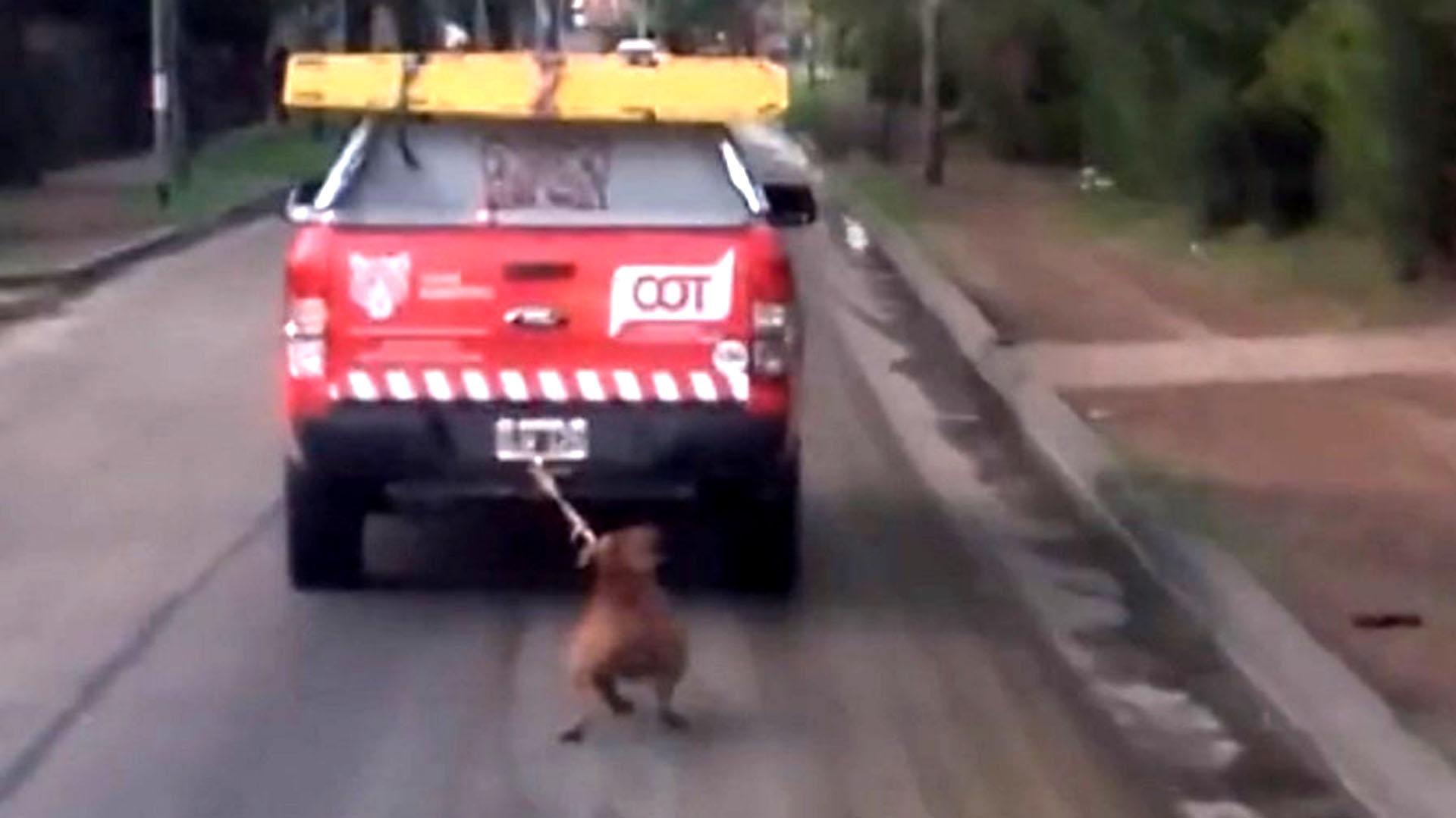 El perro arrastrado por un vehículo municipal