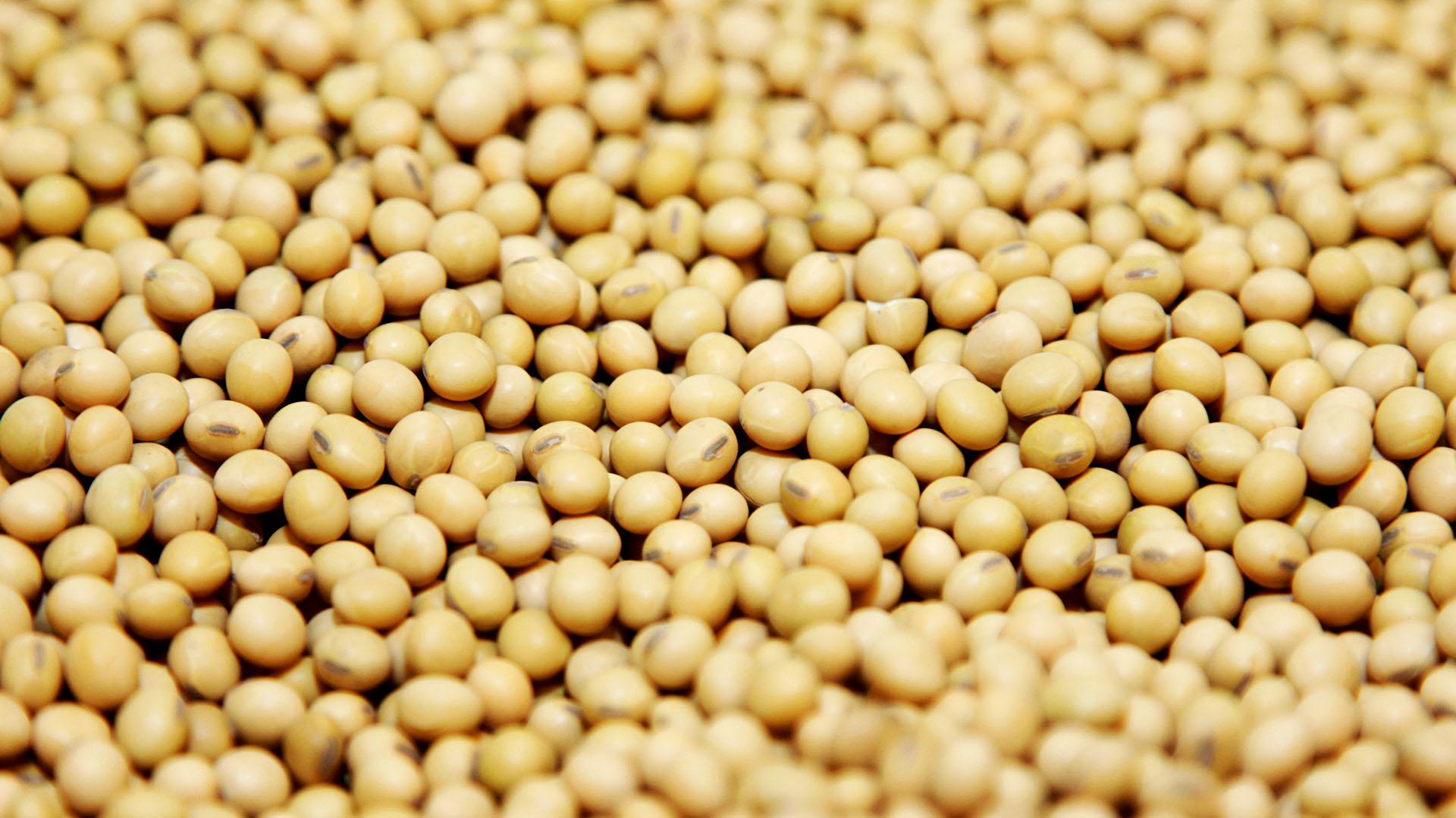 En el segmento de la harina de soja, Argentina difícilmente pueda ser reemplazada a la hora de abastecer al mundo de este alimento, las subas ascendieron al 12% hasta los USD 415,5 la tonelada.