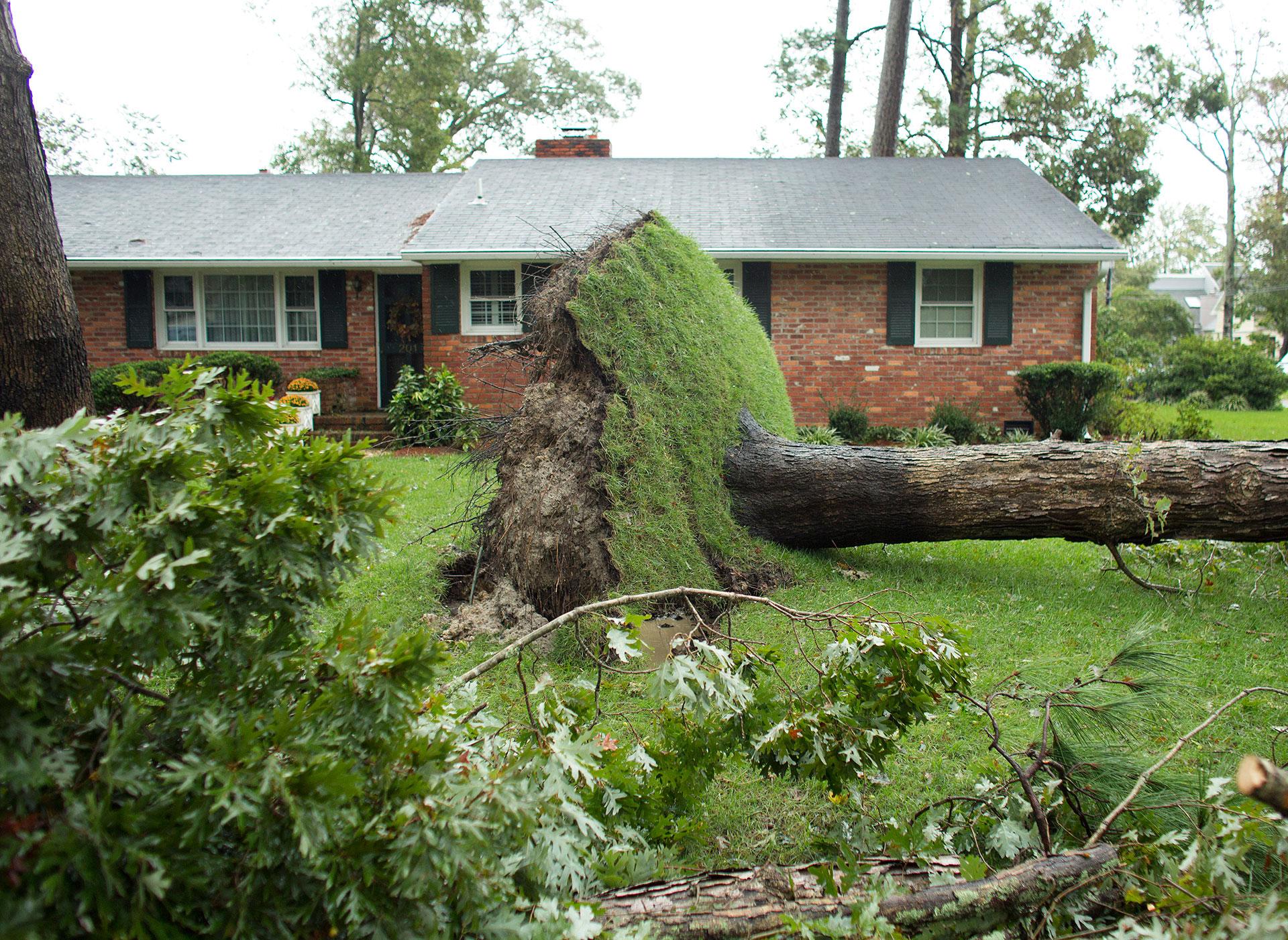 El huracán arrancó grandes árboles de raiz causando destrozos