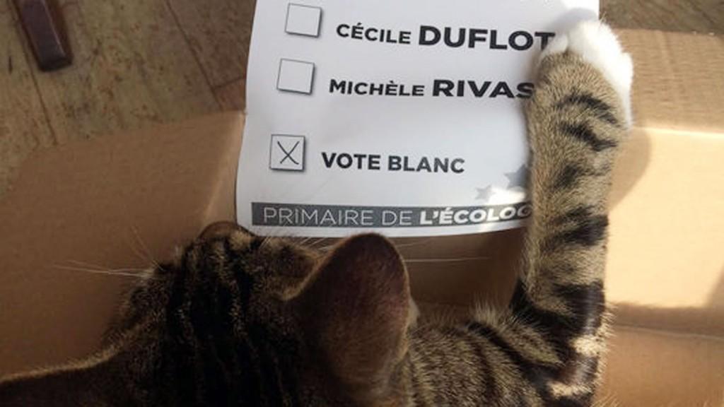 Para exponer al sistema electoral francés, un gato se registró como votante (Le Monde)