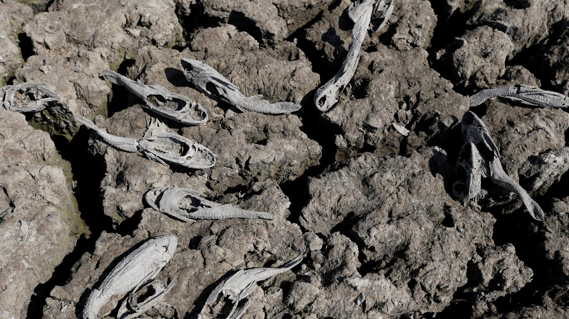 Integrantes de ONGs ambientalistas advierten por la inminencia de un desastre ecológico en el curso de agua