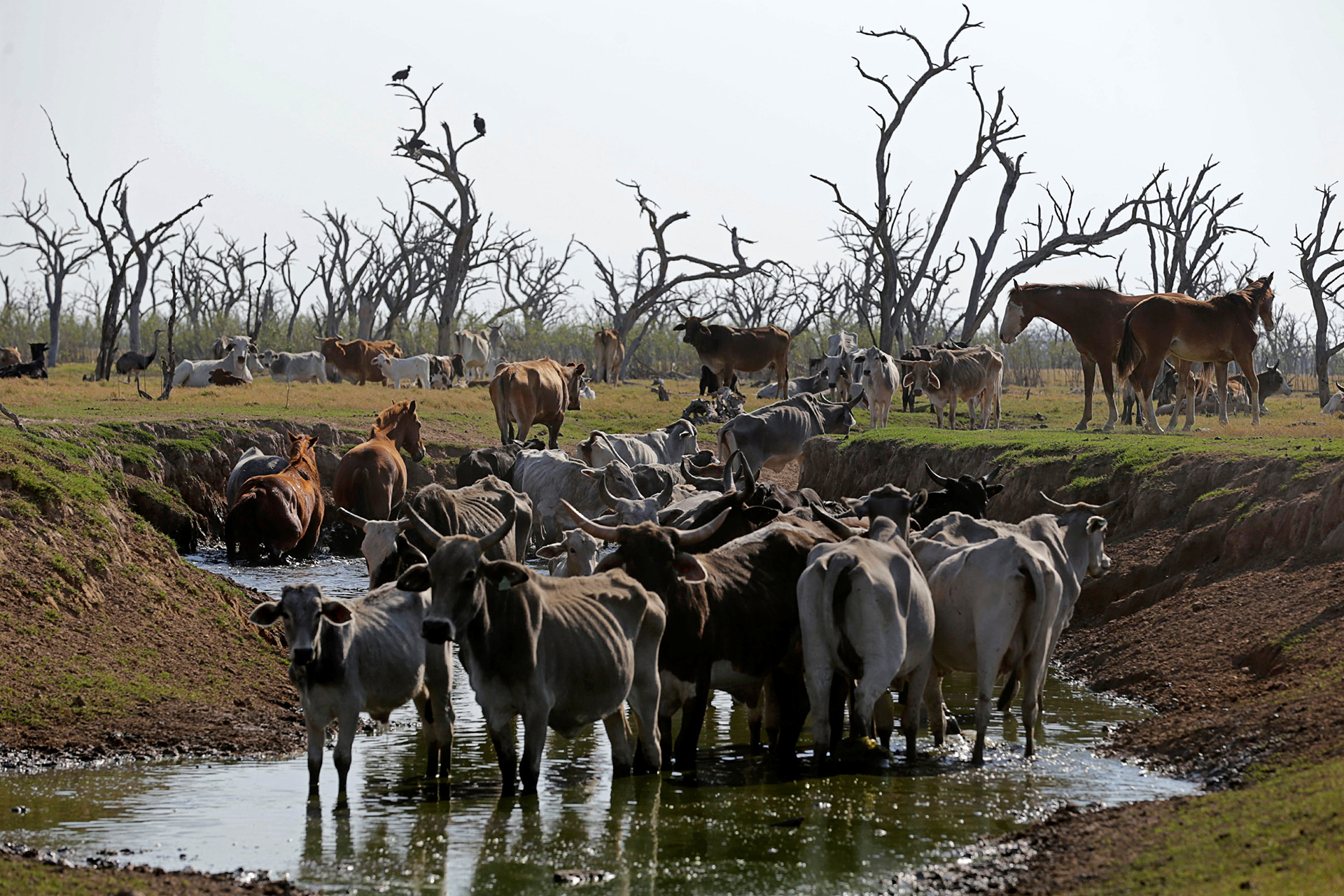 Integrantes de ONGs ambientalistas advierten por la inminencia de un desastre ecológico en el curso del agua del Río Pilcomayo