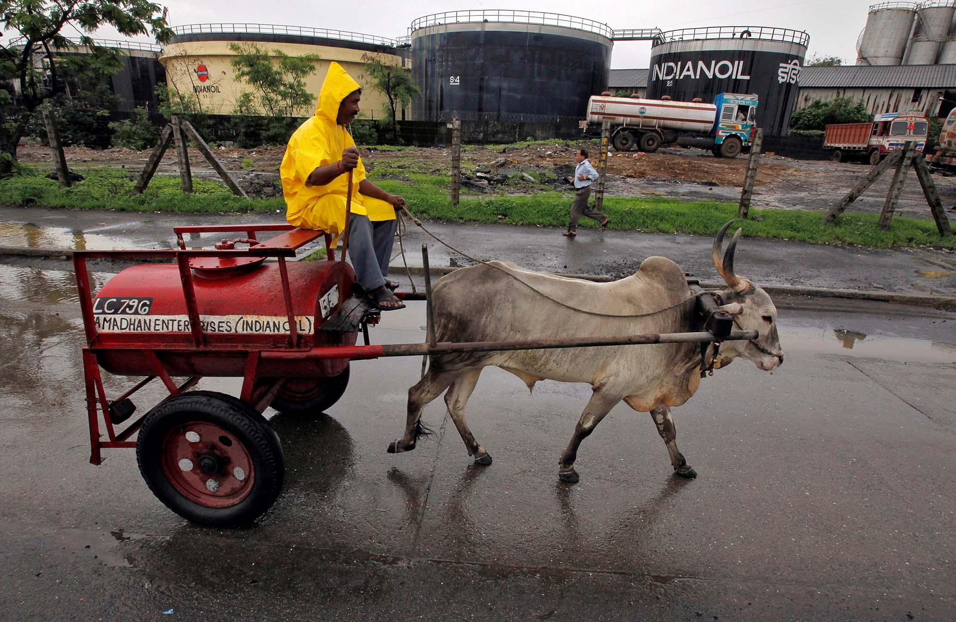 Un trabajador transporta kerosene en un carro tirado por un buey viaja, en el depósito de combustible de Indian Oil Corporation, en Bombay